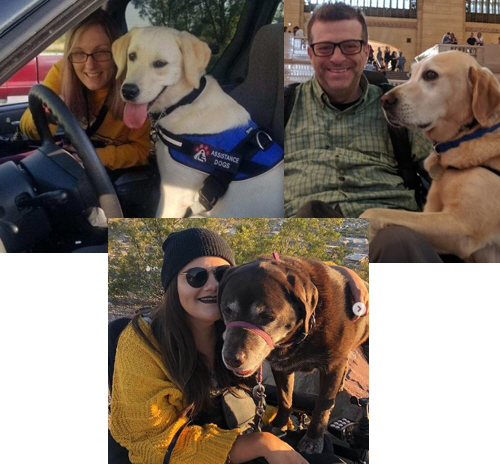 Life After Paralysis podcast: Episode #6 Service Dogs for Quadriplegics